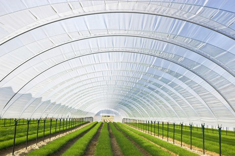 màng nhựa pvc dẻo dùng trong nông nghiệp công nghệ cao